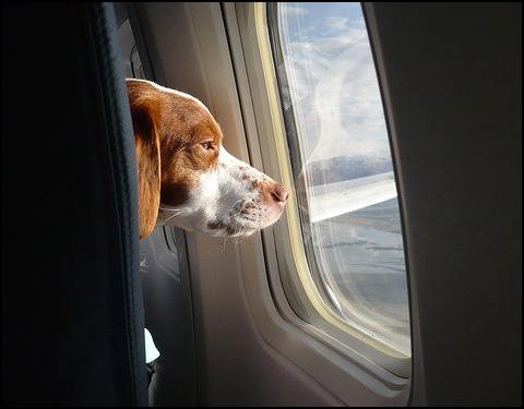 укачивает в самолете